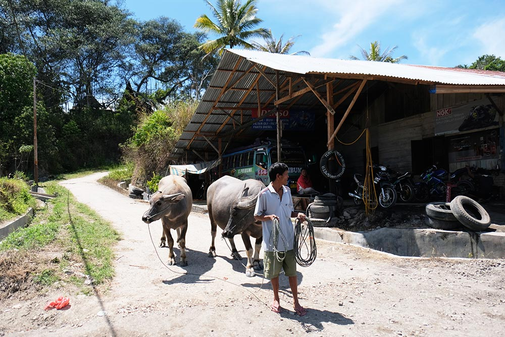 Bukit Holbung: Memandang Danau Toba dari Kejauhan