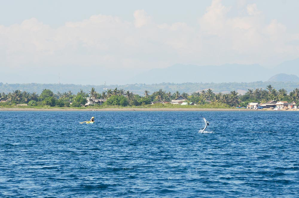 ohelterskelter.com pulau moyo